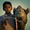 Camel Herder archive